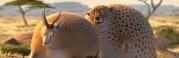rollin-safari