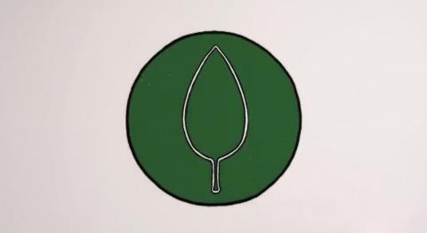 flora-proactiv01