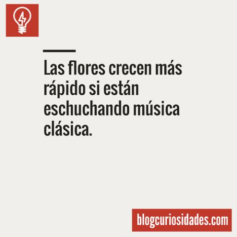 blogcuriosidades10