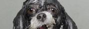 sophie-gamand-perros-mojados