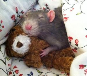 ratas y osos de peluche mis gafas de pasta