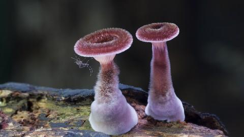 fantastic fungi mis gafas de pasta02