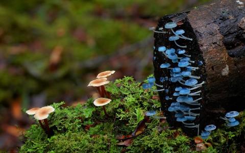 fantastic fungi mis gafas de pasta05