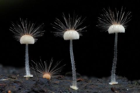 fantastic fungi mis gafas de pasta08