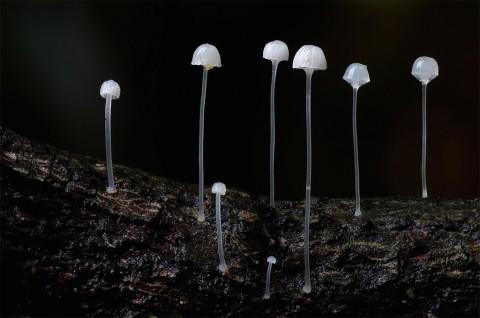 fantastic fungi mis gafas de pasta09