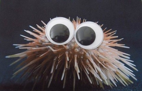 fauna marina ojitos mis gafas de pasta02