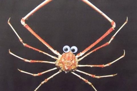 fauna marina ojitos mis gafas de pasta04
