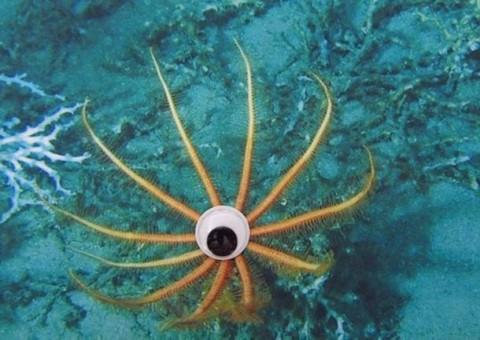 fauna marina ojitos mis gafas de pasta07