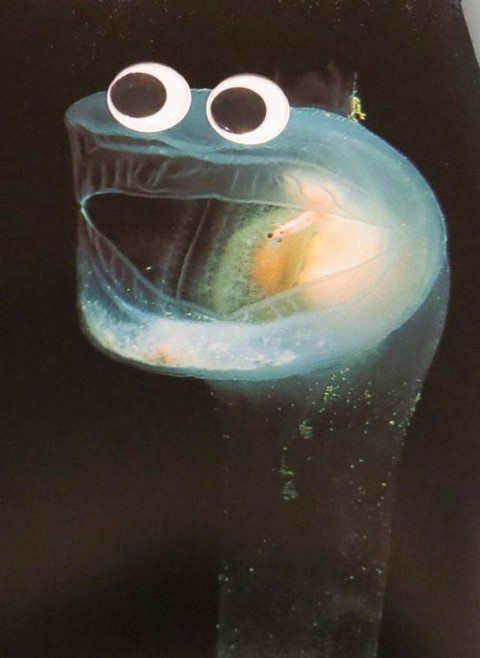 fauna marina ojitos mis gafas de pasta08