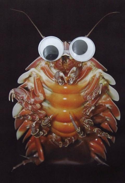 fauna marina ojitos mis gafas de pasta10