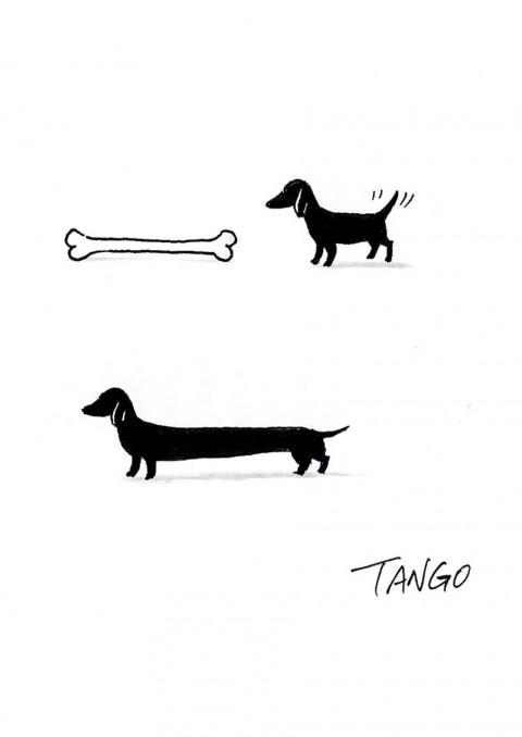 tango2010 mis gafas de pasta11