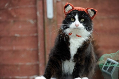 gatos con sombrero mis gafas de pasta01