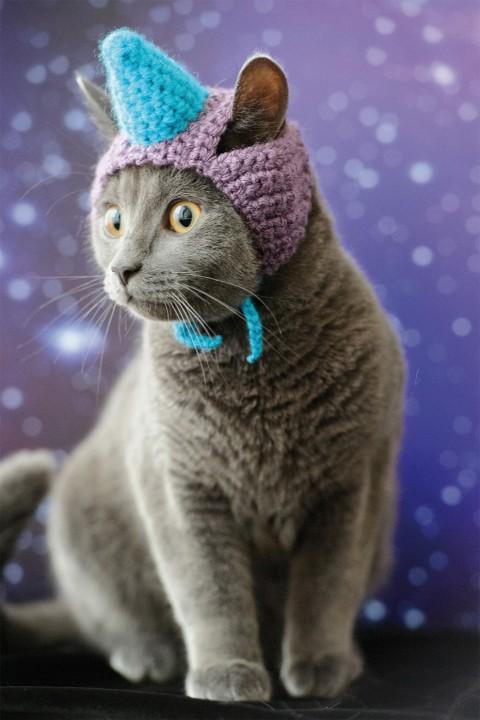 gatos con sombrero mis gafas de pasta02