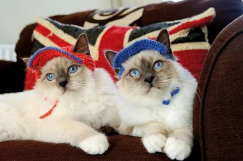 gatos con sombrero mis gafas de pasta03