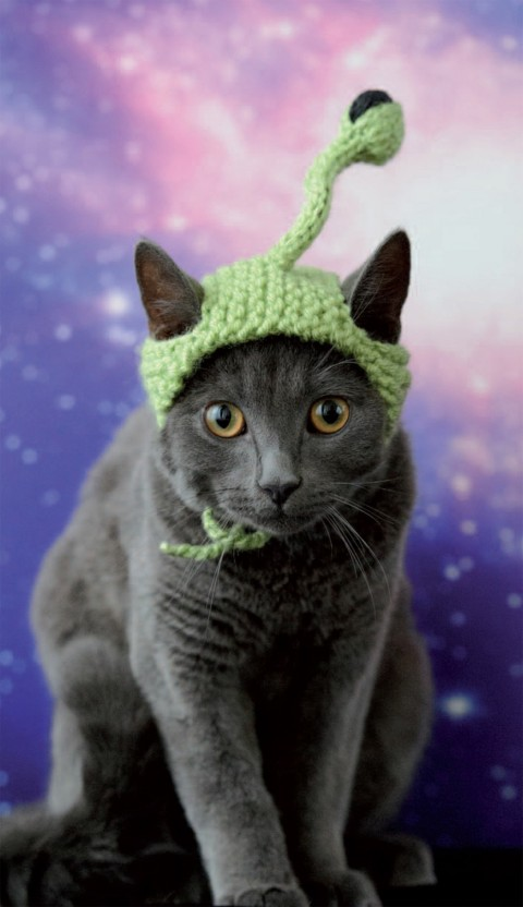 gatos con sombrero mis gafas de pasta04