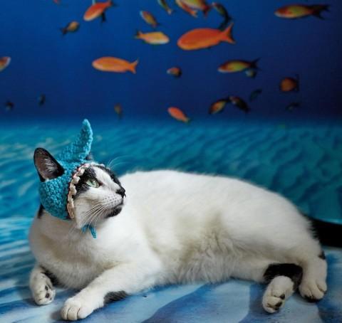 gatos con sombrero mis gafas de pasta05