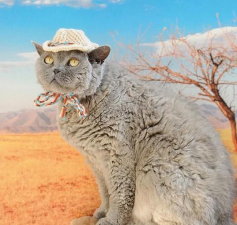 gatos con sombrero mis gafas de pasta07