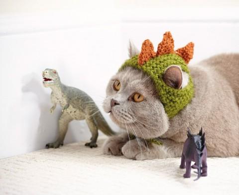 gatos con sombrero mis gafas de pasta08