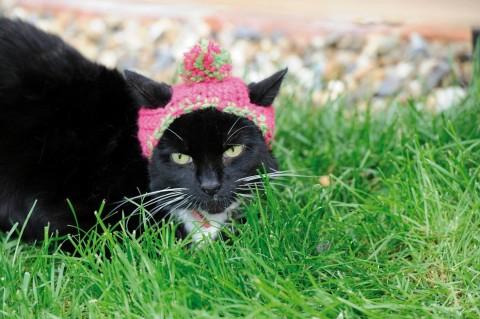gatos con sombrero mis gafas de pasta09