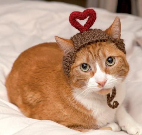 gatos con sombrero mis gafas de pasta10