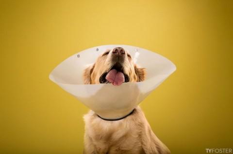 perros conos mis gafas de pasta04