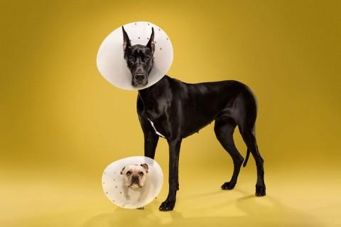 perros conos mis gafas de pasta09