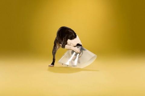 perros conos mis gafas de pasta11