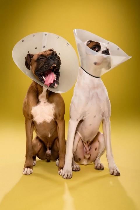 perros conos mis gafas de pasta13