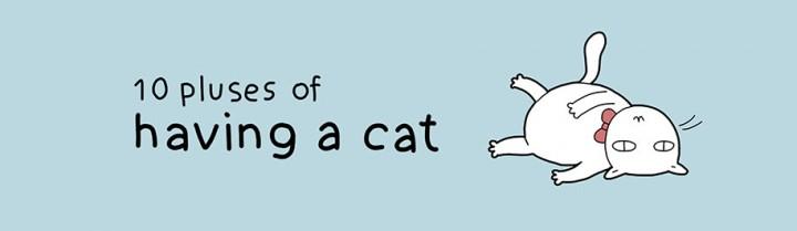10 beneficios gatos mis gafas de pasta00