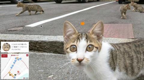 cat-street-view-misgafasdepasta01