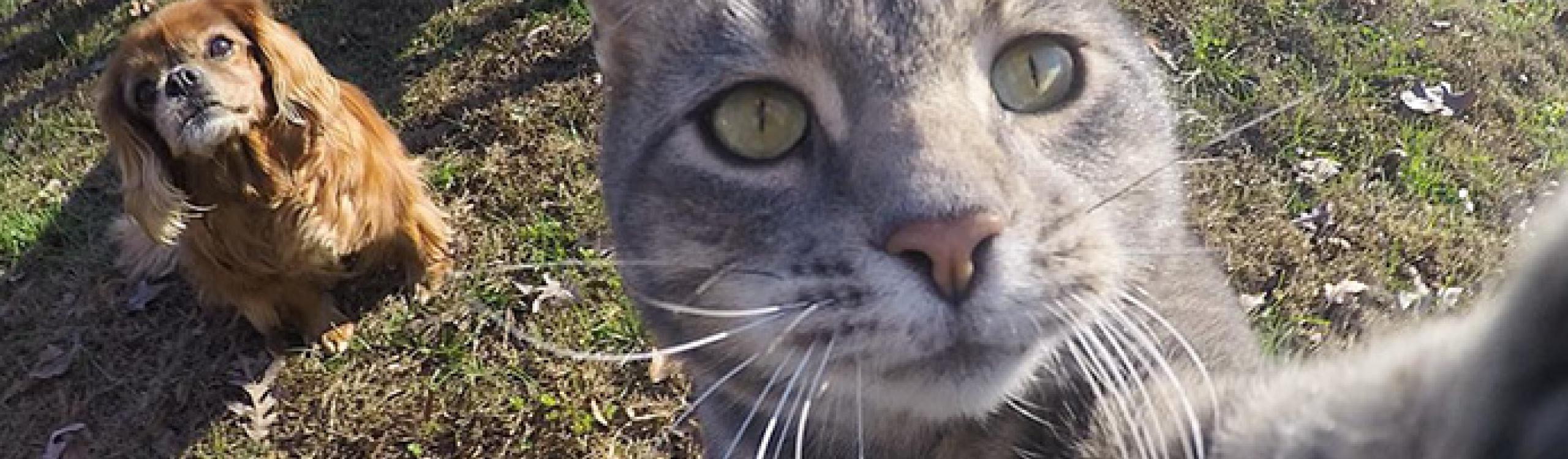 este gato usa una cámara gopro para hacerse selfies