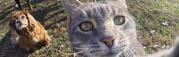 gato-gopro-selfies-mis-gafas-de-pasta