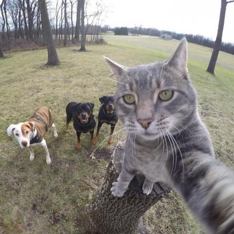 gato-gopro-selfies-mis-gafas-de-pasta03