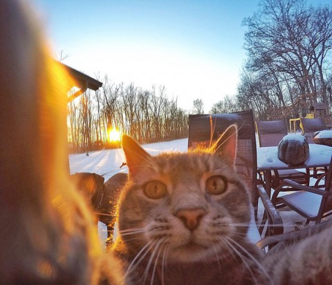 gato-gopro-selfies-mis-gafas-de-pasta04