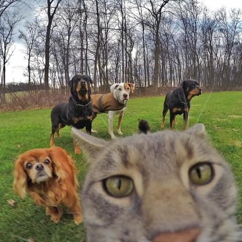 gato-gopro-selfies-mis-gafas-de-pasta05