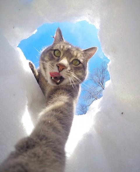 gato-gopro-selfies-mis-gafas-de-pasta06