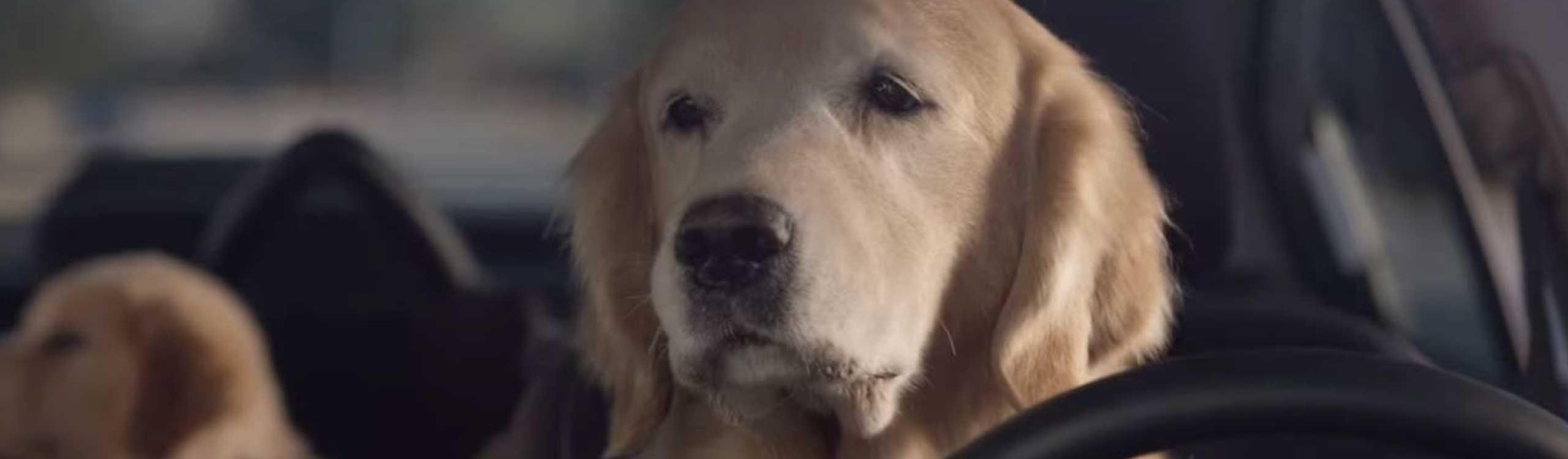 perros-subaru-mis-gafas-de-pasta-destacado