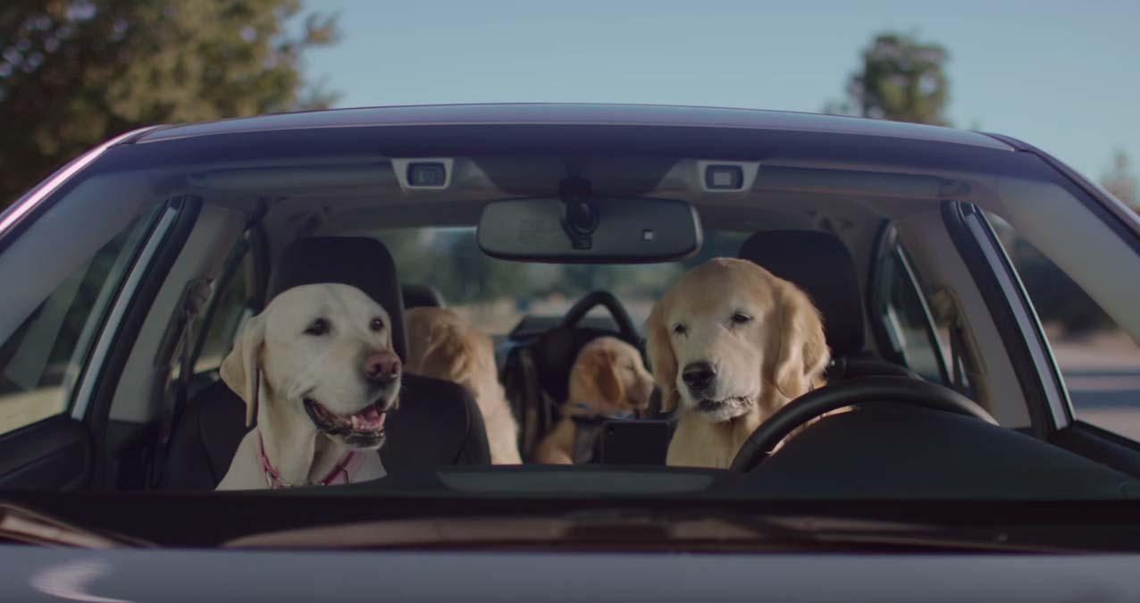 una familia de perros dentro de un subaru