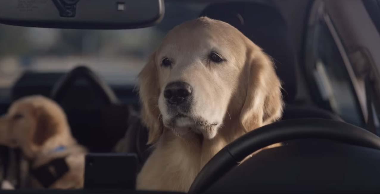 un perro conduciendo un subaru