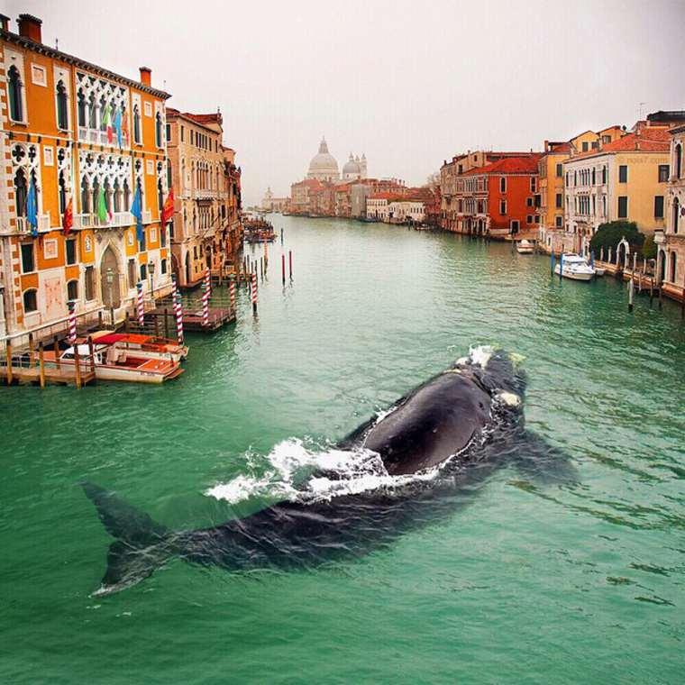 las fotazas de rober jahns. una orca en venecia