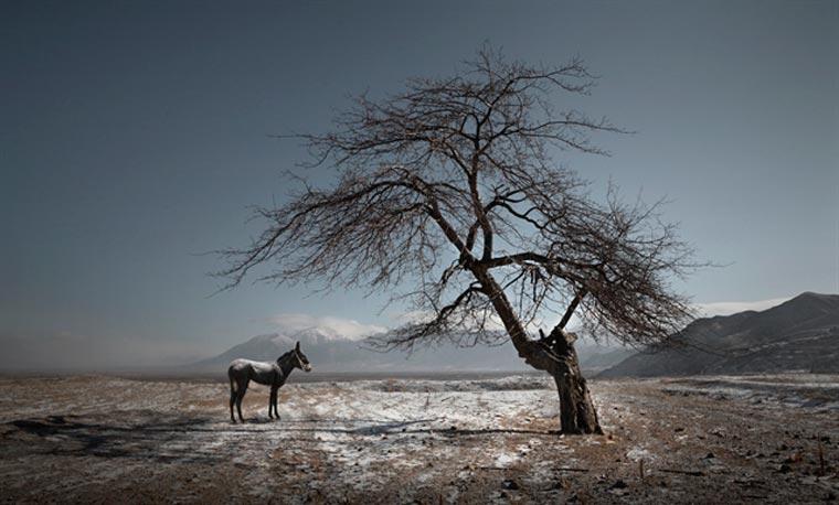 sony world photography awards maoyuan cui