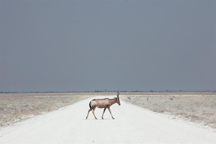 sony world photography awards maroesjka lavigne belgium 2
