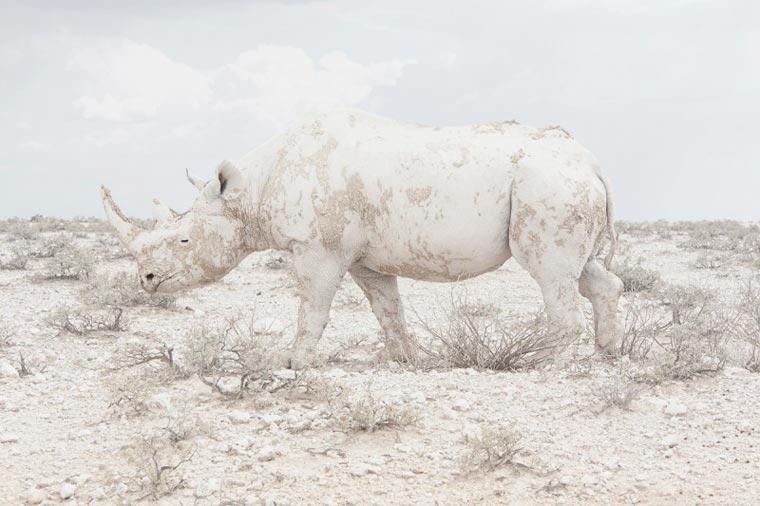 sony world photography awards maroesjka lavigne belgium