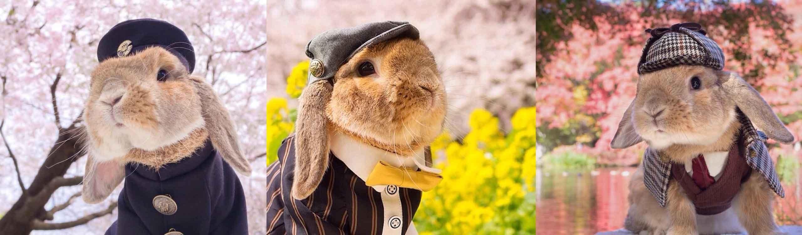 puipui, el elegante conejo que lo peta en instagram con sus refinados outfits