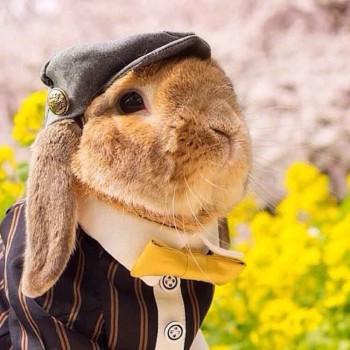mumitan-conejo-elegante-mis-gafas-de-pasta-destacado