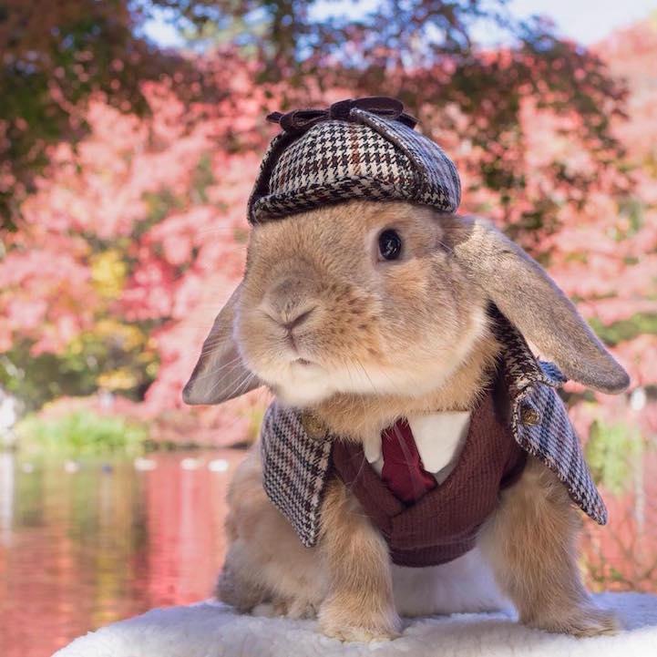 mumitan puipui conejo elegante mis gafas de pasta01