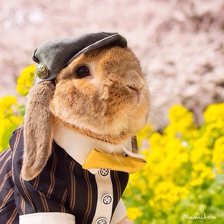 mumitan puipui conejo elegante mis gafas de pasta02