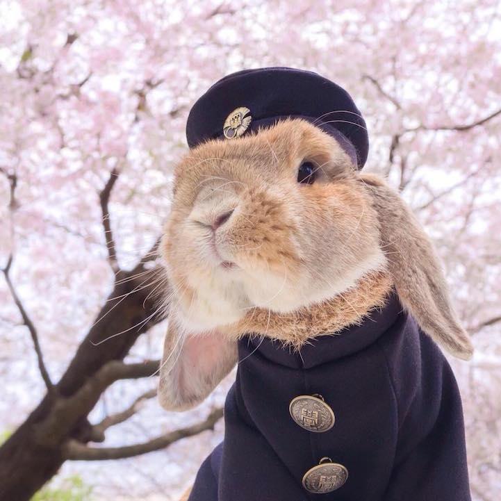mumitan puipui conejo elegante mis gafas de pasta03