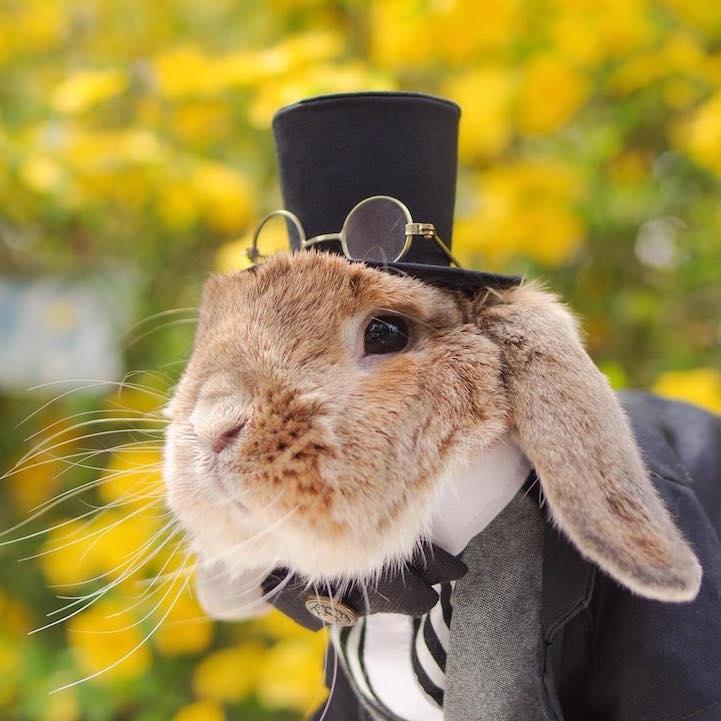 mumitan puipui conejo elegante mis gafas de pasta04