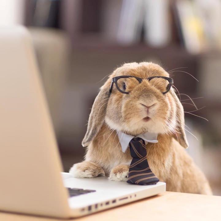 mumitan puipui conejo elegante mis gafas de pasta05
